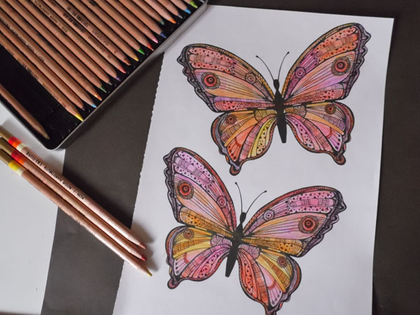tri tone butterfly