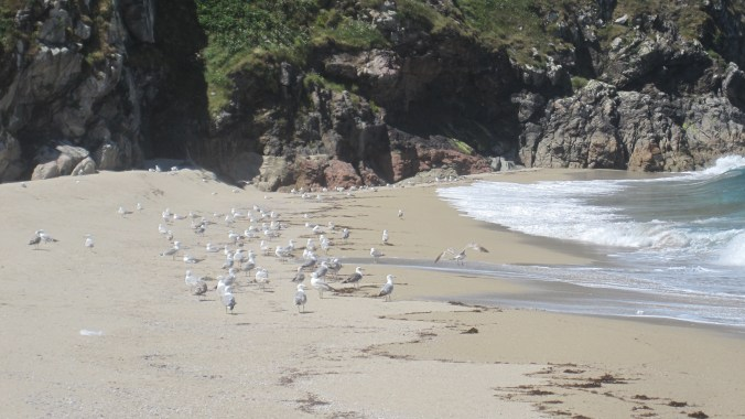 Bay of Amela with seagulls