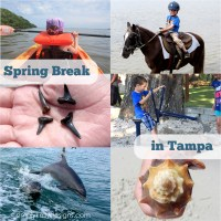 Spring Break In Tampa Florida