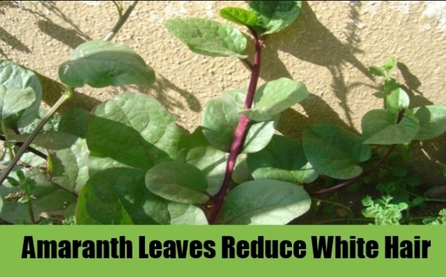 Amaranth leaves To Get Rid Of White Hairs