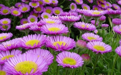 Worlds top 100 beautiful flowers images wallpaper photos free download beautiful flower image voltagebd Image collections