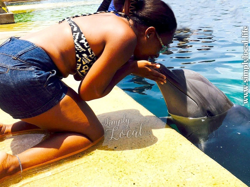 Dolphin Cove: Swim with Dolphins and Find More Than Flippers