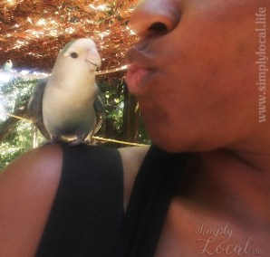 bird-kiss
