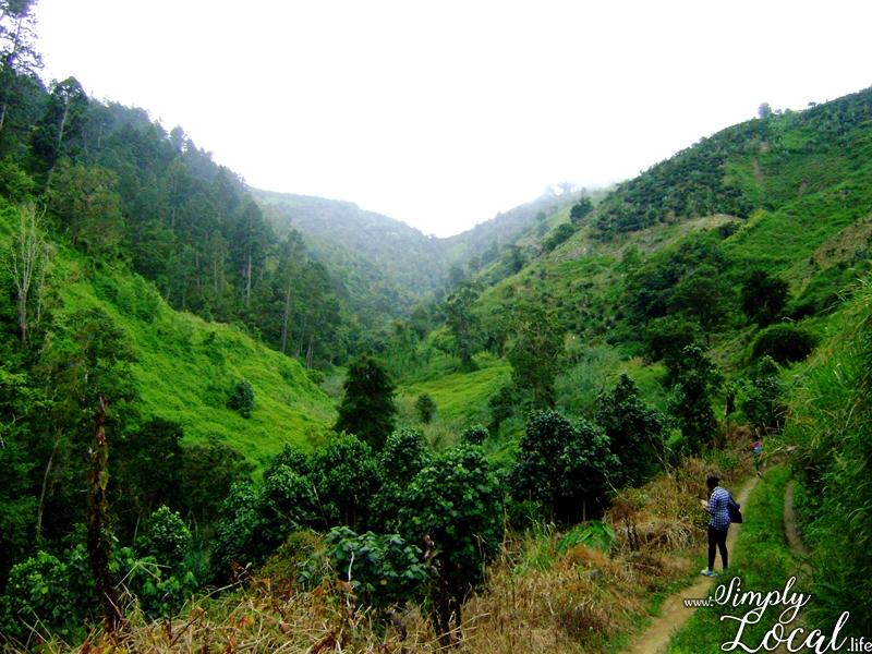 UNESCO Heritage Site Blue Mountains Jamaica