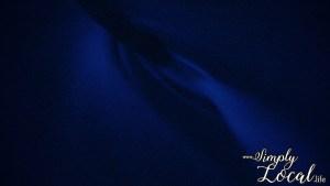 Luminous Lagoon Glistening Waters glow bioluminescent