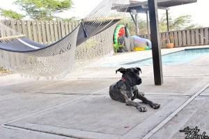 Turtles Nest Treasure Beach Jamaica Villa dog