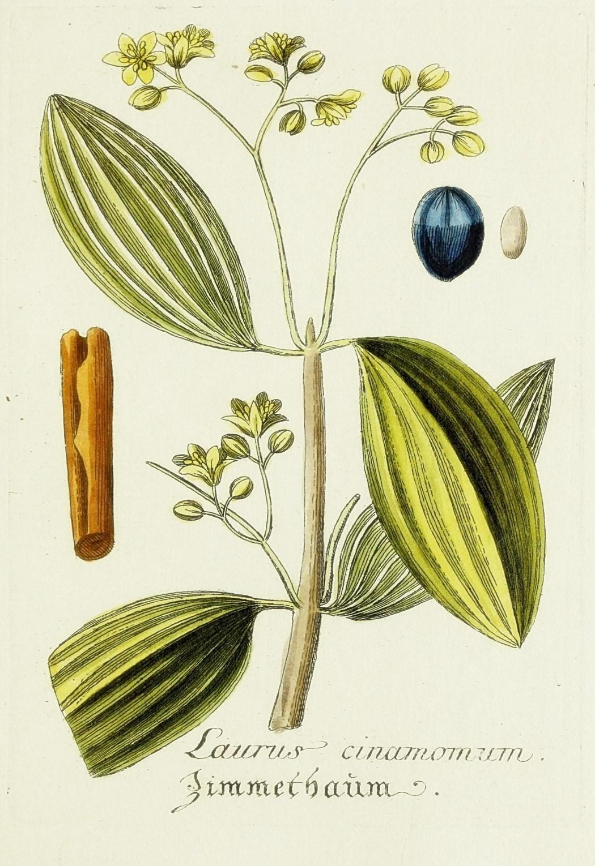 Free Printable Royal Blue And Yellow Botanical Art
