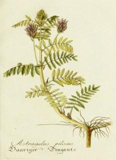 Lavender Botanical_15