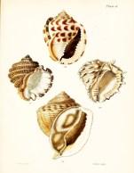 Seashell_2