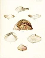 Seashell_21