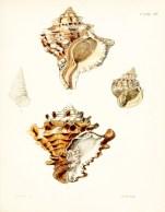 Seashell_29