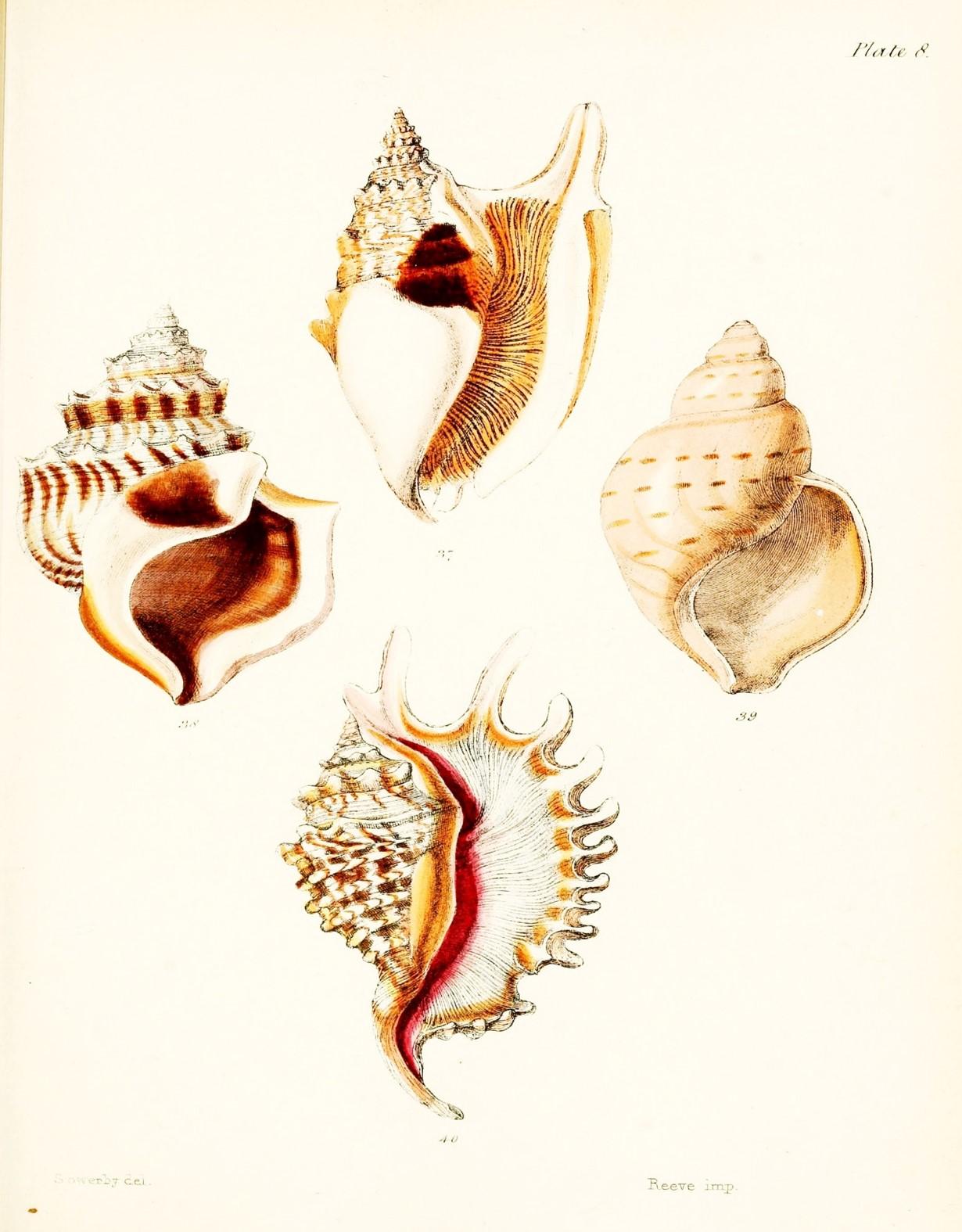 Free Printable Seashell Art