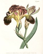 Purple Botanical_1