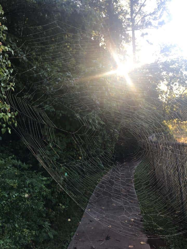 Morning walk on a sunlit path with an intricate spider-web close up.