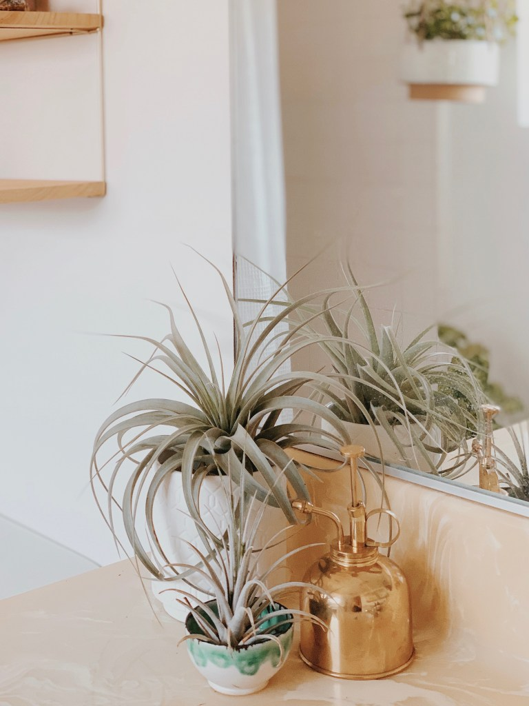 Plants and succulents add an instant update to a guest bathroom.