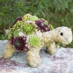 Baby Succulent Turtle Topiary Turtle Topiary Form Simply Succulents