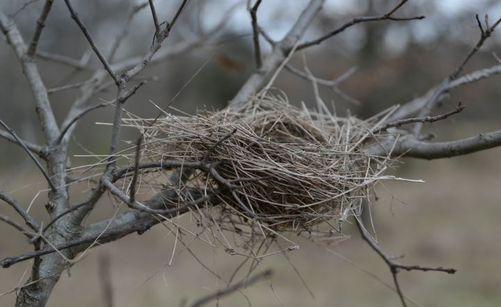 When the Empty Nest Becomes a Syndrome