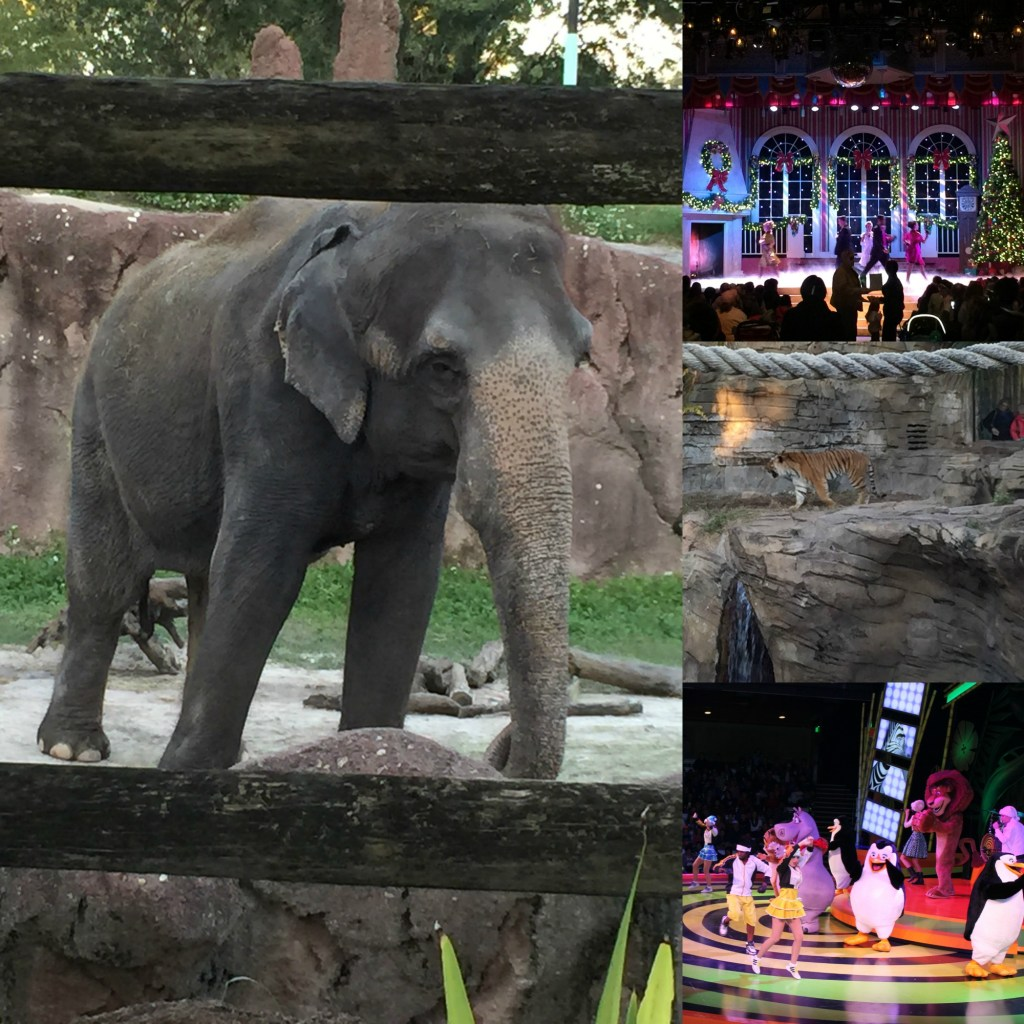 Christmas Shows and Animals to see at Busch Gardens Christmas Town