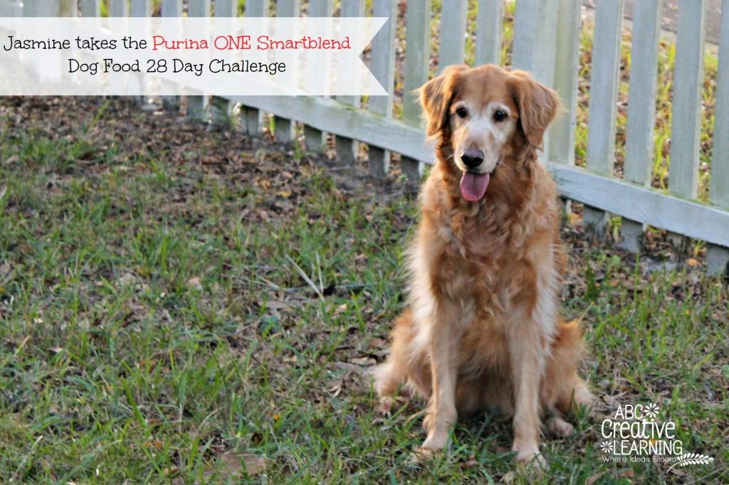 Jasmine takes the Purina ONE Smartblend Dog Food 28 Day Challenge Senior Formula