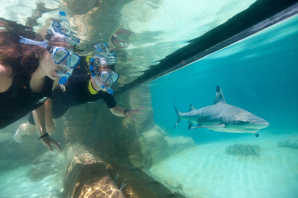 DCO-Grand_Reef-Shark_Viewing
