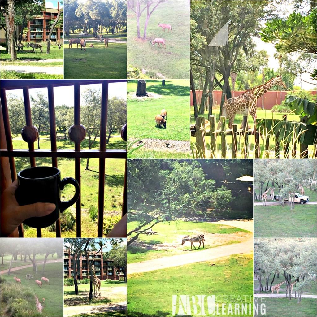 Reasons To Stay At Disney's Animal Kingdom Lodge #ZootopiaEvent Animals