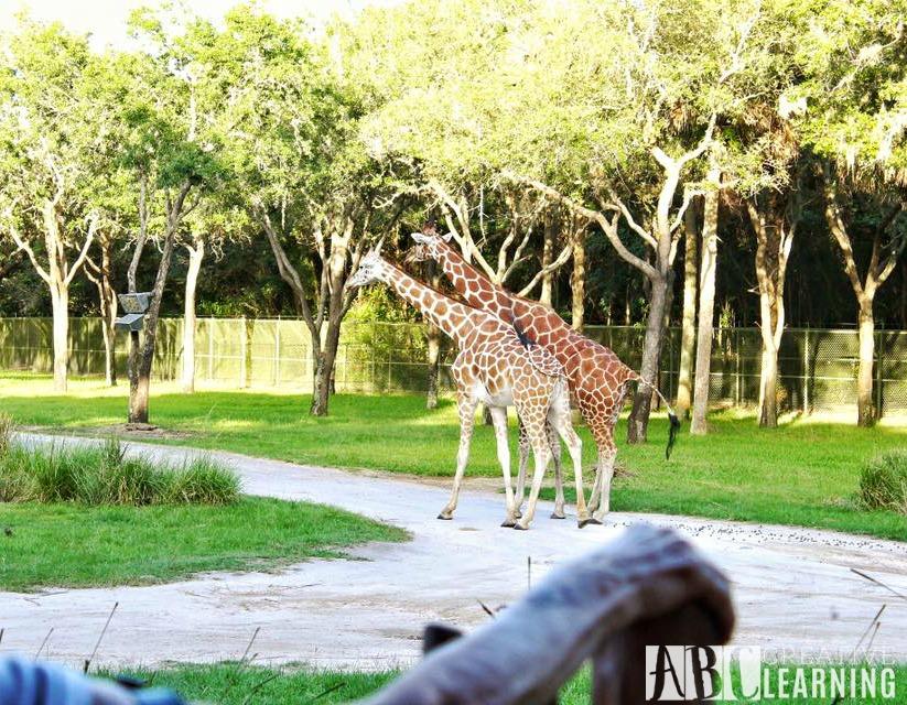 Reasons To Stay At Disney's Animal Kingdom Lodge #ZootopiaEvent Animals3