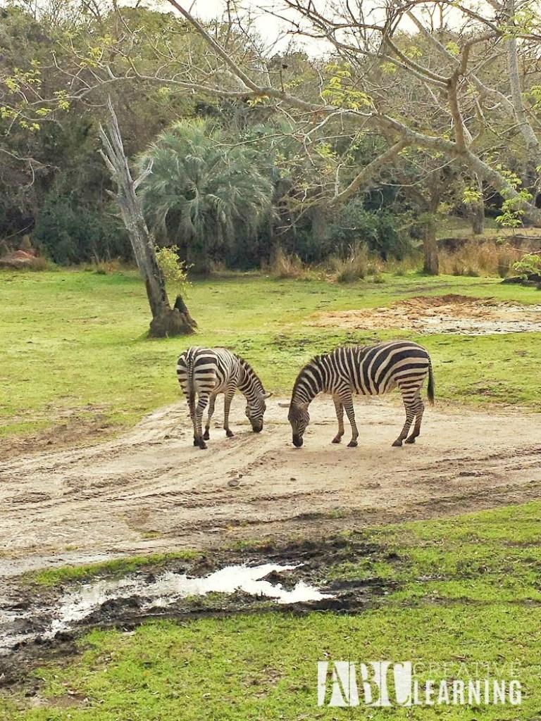 7 Reasons To Visit Disney's Animal Kingdom Theme Park 4
