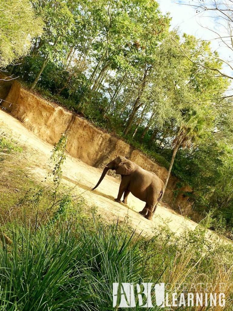 7 Reasons To Visit Disney's Animal Kingdom Theme Park 5