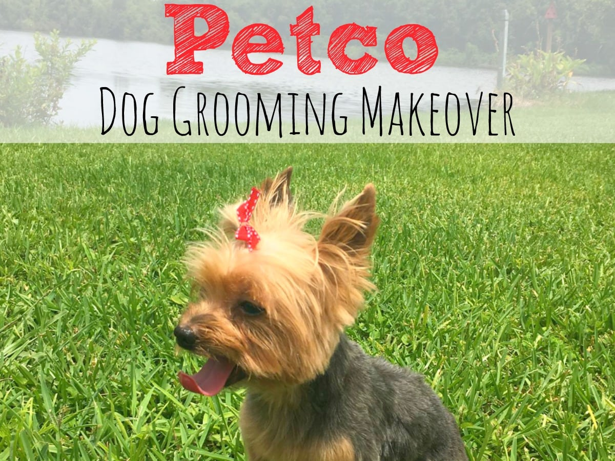 petco haircut groomer petco dog grooming makeover