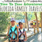Tallahassee Museum Tree to Tree Adventures