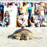 Tour de Turtles Event At Vero Beach