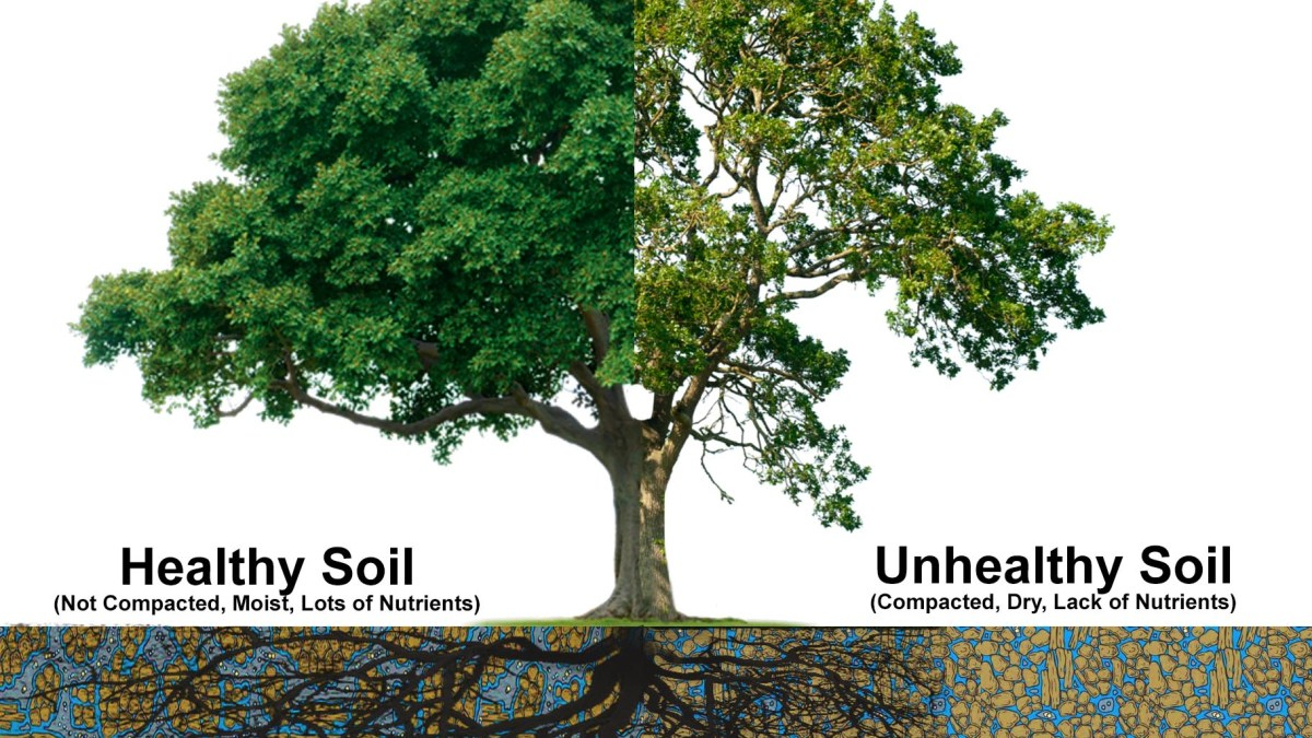 Image describing how to give the Best Tree Root Care For your Property