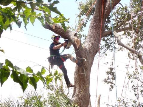 Arborist Life