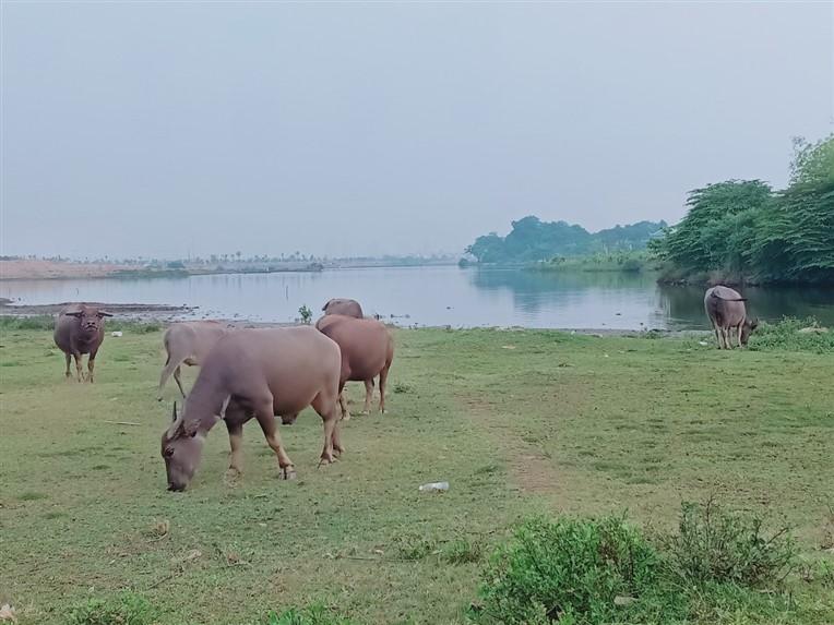 Hoi An countryside (9)