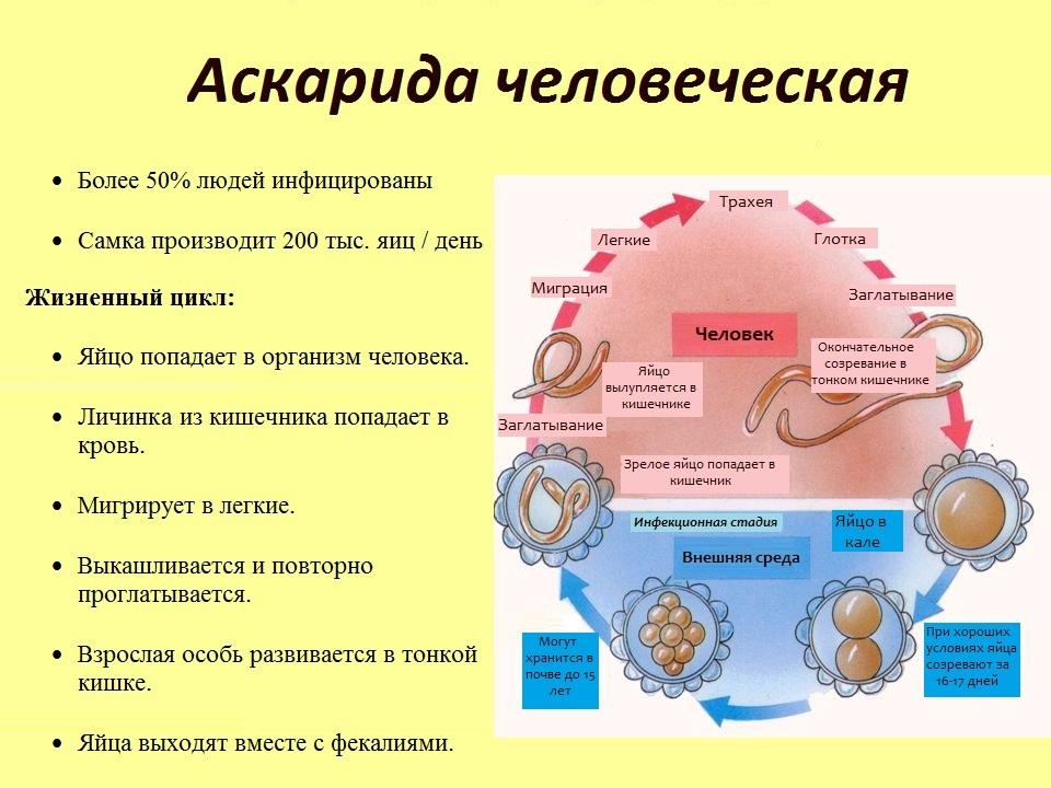 анализ крови при глистах в печени