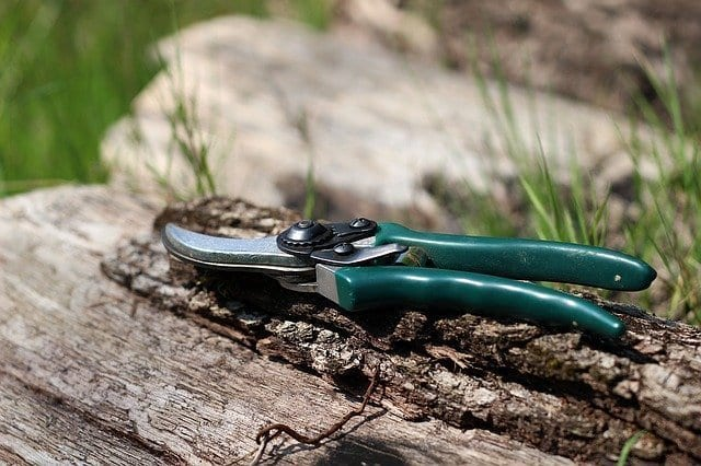 Shears-winter-gardening-tips