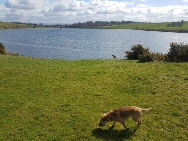 Whitehead Reservoir