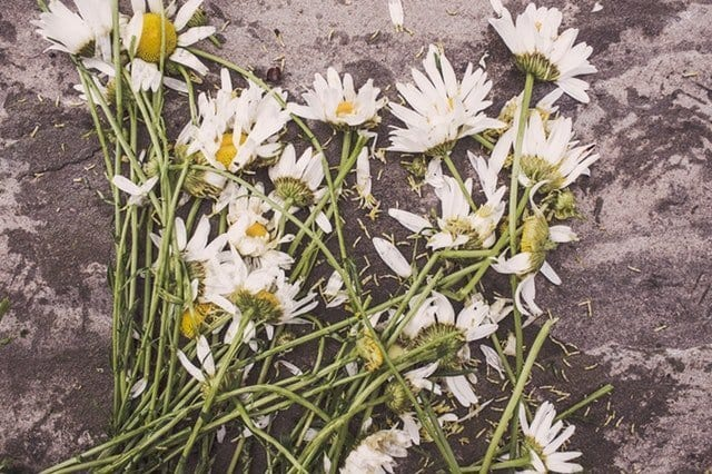 Funeral flowers - tips on dealing with grief