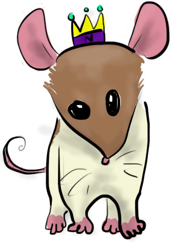 A tan and white rat with disturbing eyes of different sizes.