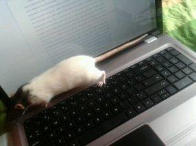 Soigné likes to type