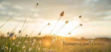 Numerus und Genus