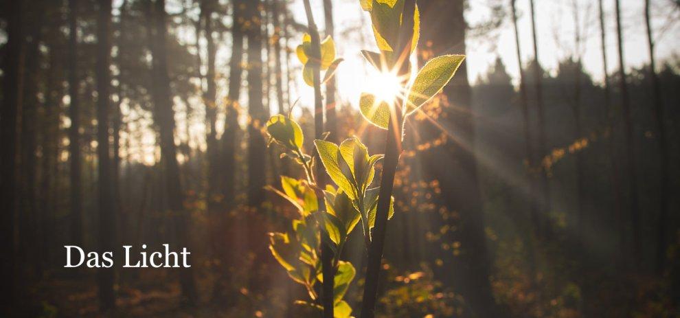 [Worldbuilding] Das Wachstum von Pflanzen – Licht