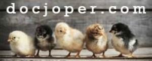 supplier DOC ayam kampung super