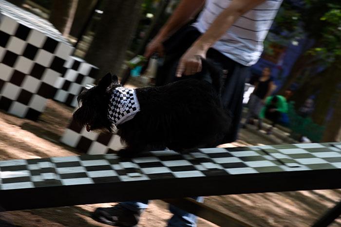 Adiestramiento Juegos - _DSC5016