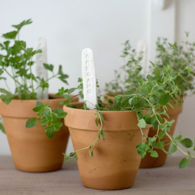 Make Your Own Herb Markers & Our Most Recent Potted Herbs