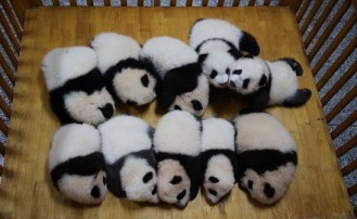 Pandas!! I want to hug them all!!