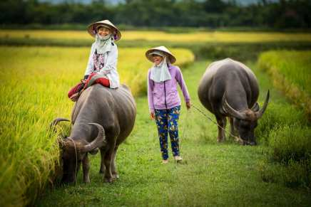 They are so curious of me, approaching them in the rice field where they are grazing their water buffalo. Lots of smiles and laughing as I clumsily try to communicate with them. Thuy and Han (55 and 53 years old) are farmers in the countryside around Hoi An Vietnam. They are sisters in Law, neighbors and clearly good friends. Everyday they bring their water buffalo out, sitting on top of them while they graze for about 2 hours in the afternoon. As the sun sets, and amongst lots of smiling and laughter they slowly make their way back home.