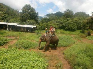 Alrededores Chiang Mai - Ruta con Elefantes