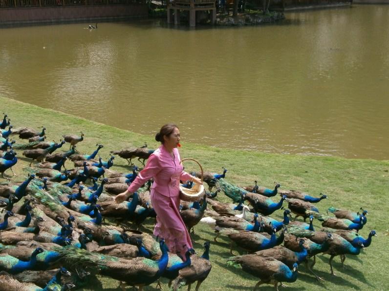 P4296613 - ¿Qué hacer en Xishuangbanna? Visitando el sur de Yunnan