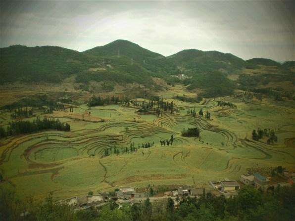 Viaje por Yunnan Luoping Campos de caracol 1 - Guide to what to see in Luoping: Ocean of flowers